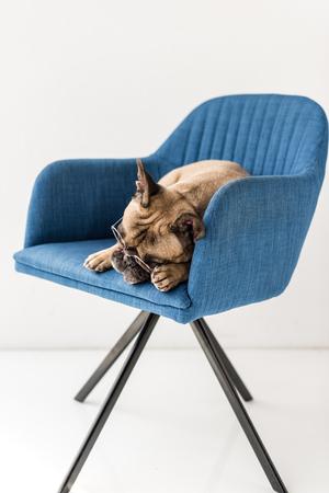 adorable french bulldog in eyeglasses lying on chair