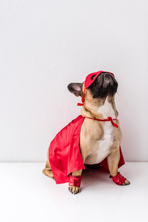 cute dog in red mask and mantle sitting on white