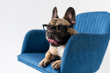 adorable funny french bulldog in eyeglasses lying on chair isolated on grey Standard-Bild - 102616604