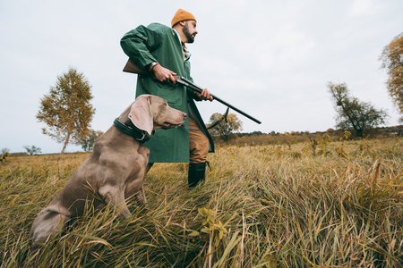 bottom view hunter going with a gun and dog in a field