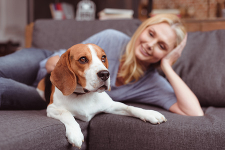 beautiful smiling woman stroking dog while lying on sofa at home  Фото со стока