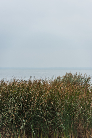beautiful calm sea with green grassweed on foreground on cloudy day