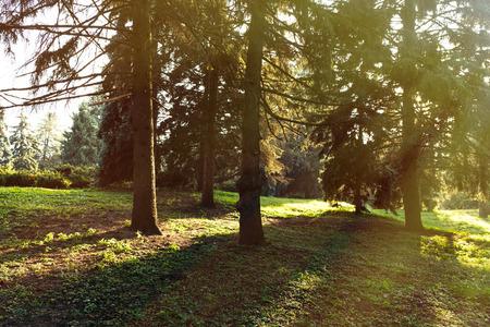 sunrise in beautiful tranquil autumn forest 版權商用圖片