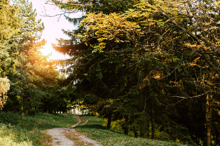 trail in beautiful autumn park at sunrise 스톡 콘텐츠