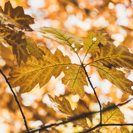 close-up view of beautiful yellow leaves on tree in autumn park