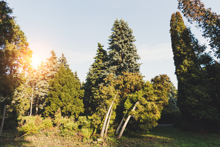 beautiful green trees and bushes in tranquil autumn park