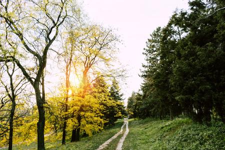 pathway in beautiful autumn park at sunrise