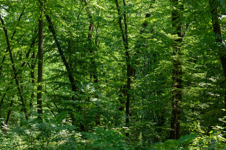 scenic view of green tress with sunlight in forest