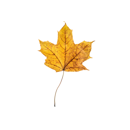 Top view of orange maple leaf isolated on white