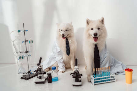 two fluffy dogs scientists lab coats working with microscopes and test tubes in laboratory