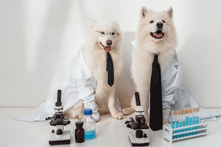 dogs scientists lab coats working with microscopes and test tubes in laboratory
