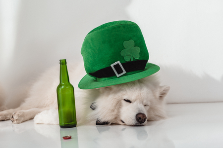 funny fluffy dog in green hat lying near empty beer bottle Stock Photo