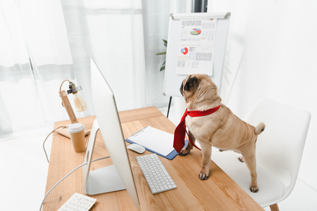 business dog in necktie standing at table with desktop computer