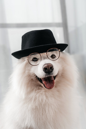 adorable fluffy samoyed dog in hat and eyeglasses looking at camera