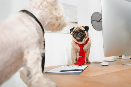 two business dogs in neckties looking at each other in office Stock Photo
