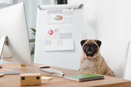 business dog looking at camera while sitting at workplace