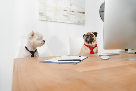 business dogs in neckties working together in office