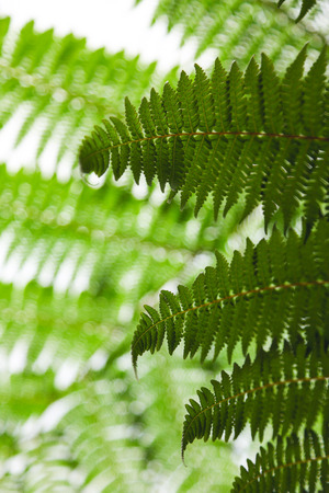 close-up shot of beautiful fern leaves on light natural background