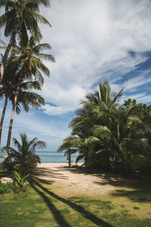 palm trees on tropical beach with blue ocean on background Stock Photo