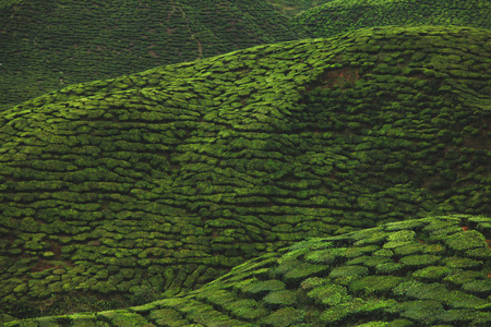 aerial view of green tea plantation for background Stock fotó