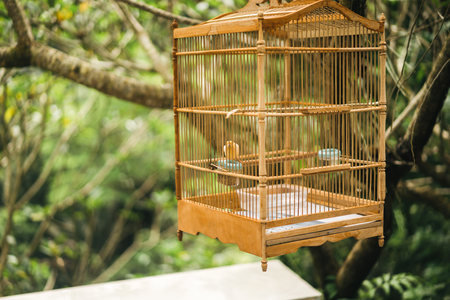 close up view of little bird in wooden cage that hanging on tree Foto de archivo