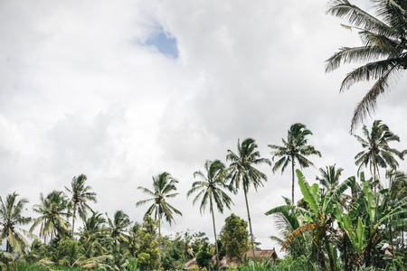 scenic view of palm trees and cloudy sky in ubud, bali, indonesia
