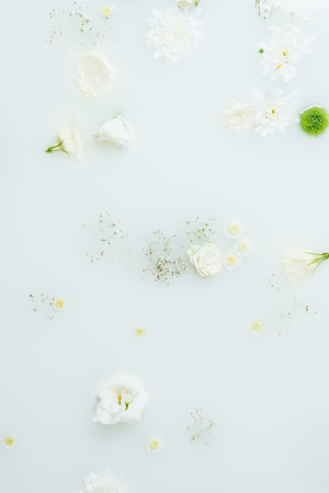 top view of beautiful white and green chrysanthemum flowers and gypsophila in milk