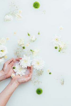 cropped shot of woman holding beautiful white chrysanthemum flowers in milk with gypsophila Stock Photo
