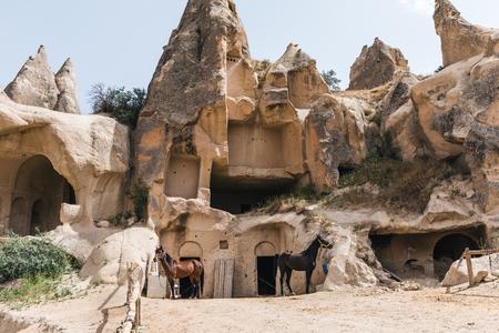 horses near caves in rocks at goreme national park, cappadocia, turkey