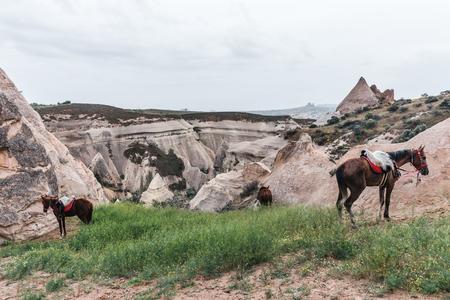 horses grazing on green grass near scenic rock formations in cappadocia, turkey