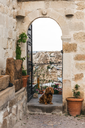 dog near open door with majestic view at rock formations in cappadocia, turkey