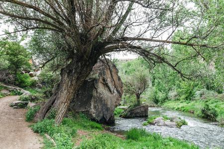 large tree between footpath and rapid river in cappadocia, turkey