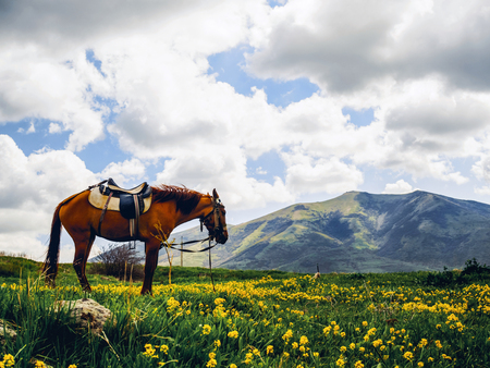 lonely horse on beautiful flowery hill, Armenia 版權商用圖片