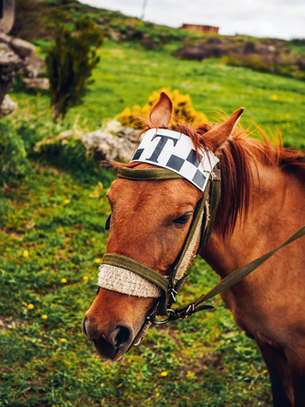 close-up shot of cute horse with taxi sign on head, armenia Banco de Imagens
