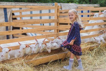 goats biting kids dress at farm, happy child looking at camera