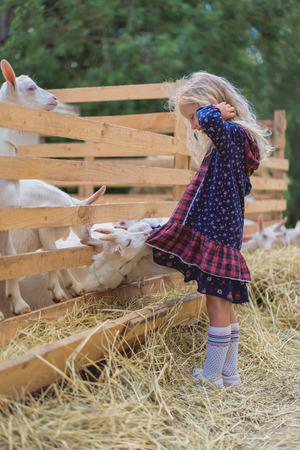 side view of goats biting kids dress at farm 写真素材