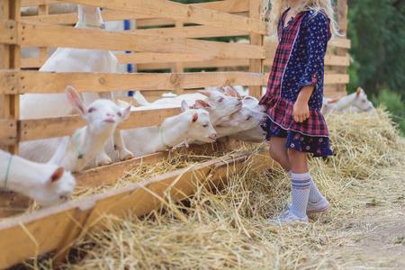 cropped image of goats biting kids dress at farm