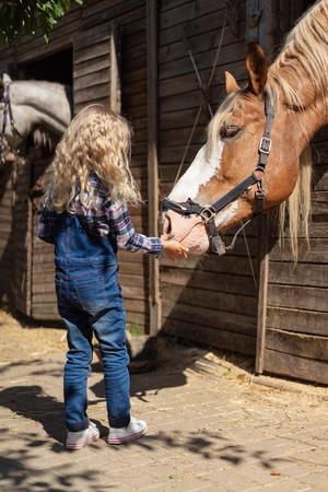 kid feeding brown horse at farm Banco de Imagens