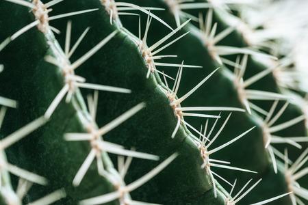macro view of green cactus with needles Stockfoto