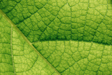 macro texture of natural green leaf Banco de Imagens