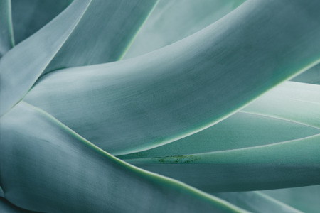 close up background with blue aloe plant Reklamní fotografie