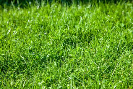 selective focus of green lawn on summer day background