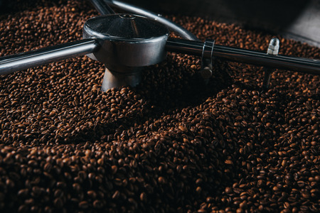 Professional coffee roaster with fresh roasted coffee beans
