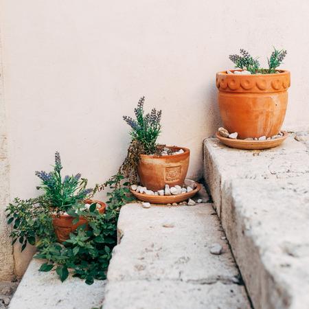 close up view of arranged flowerpots with plants on steps, Dubrovnik, Croatia Reklamní fotografie