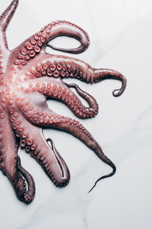 top view of raw octopus on light marble surface Фото со стока
