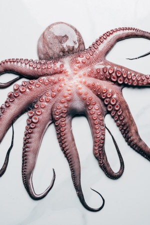 top view of big uncooked octopus on light marble surface Фото со стока