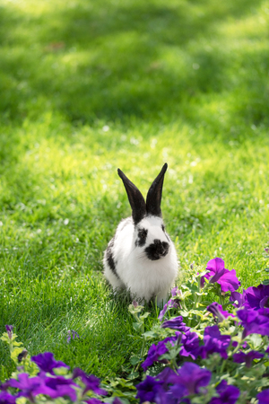 cute black and white bunny on green grass near purple tobacco flowers