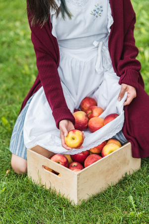 cropped view of girl putting apples from apron into wooden box Stock Photo