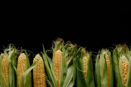 top view of arrangement of fresh corn cobs isolated on black