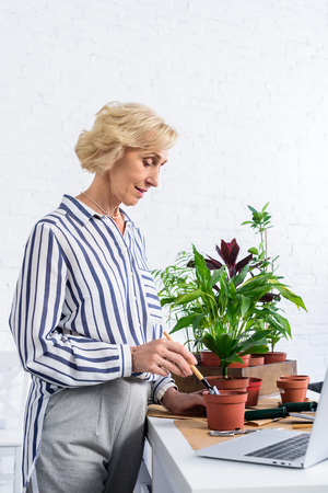 smiling senior woman cultivating potted plants and using laptop at home